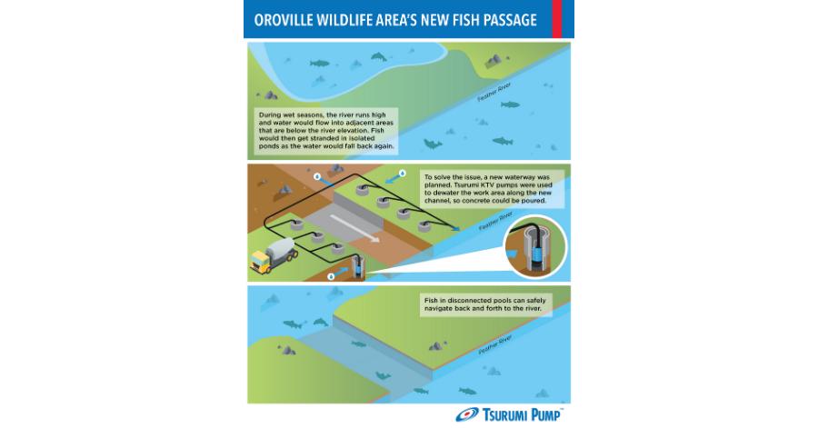 Tsurumi wildlife restoration work in northern California infograph