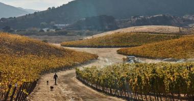 Grundfos Peter Work gives the vines a final autumn soak Ampelos