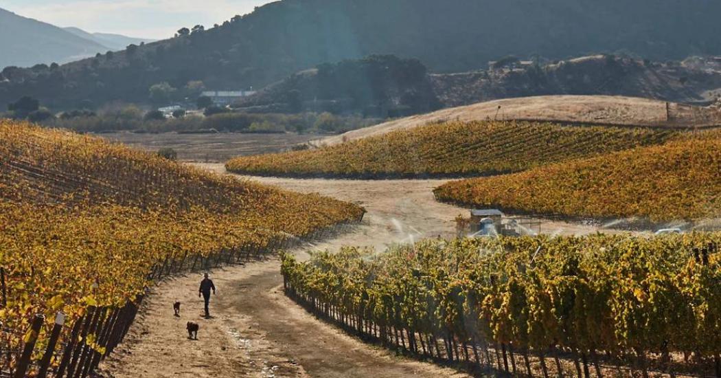 Grundfos Peter Work gives the vines a final autumn soak